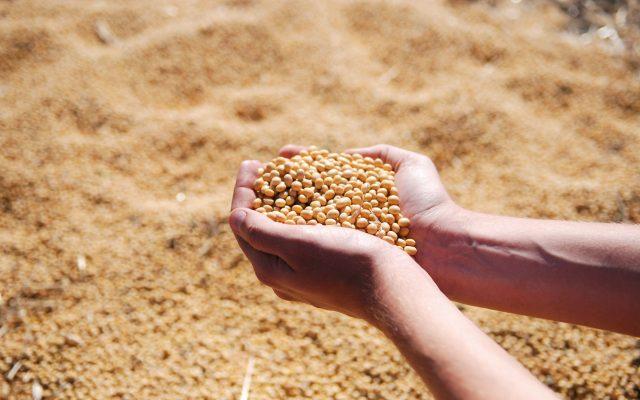 soybean-1831703